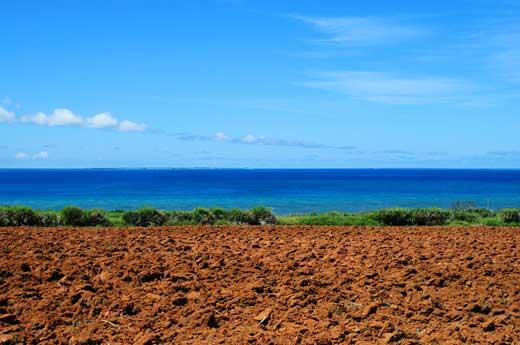 小浜島の道から見た海