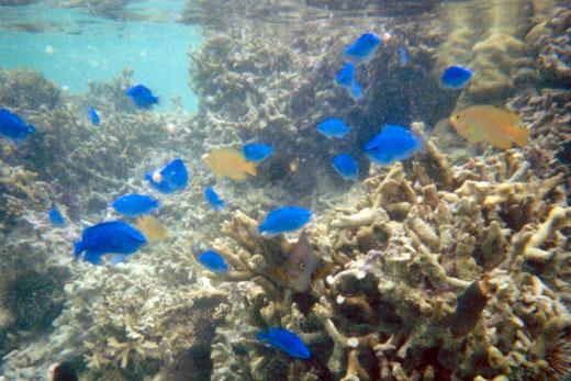 瀬底ビーチの水中写真