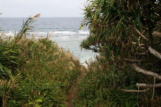 ティーヌ浜へ続く獣道